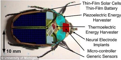 装有微型能量收集器的六月鳃角金龟