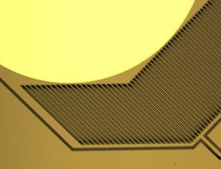 微镜细节图