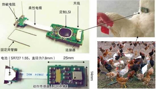 禽流感监测仪