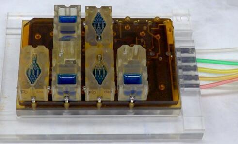 EVATAR是一款口袋大小的女性生殖系统模型