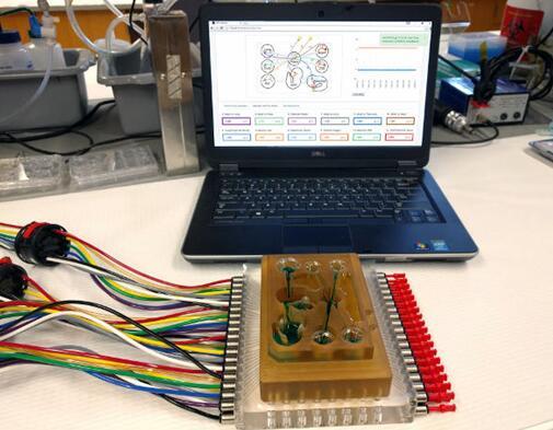 研究人员将多器官平台连接到相关软件,每个孔都连接有一个微型生理系统
