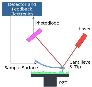 原子力显微镜的原理示意图