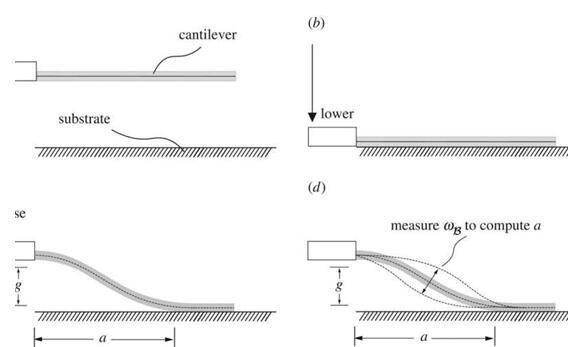 通过稍加改动,一台原子力显微镜就能用于测量微小材料的黏附力