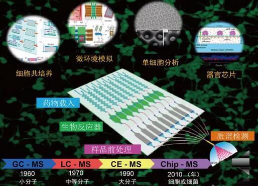 小芯片,大用途:微流控芯片细胞分析