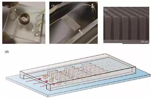 可以进行组织整体培养和解离的芯片