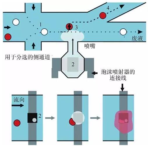 微流控芯片中利用机械力裂解单细胞的原理图