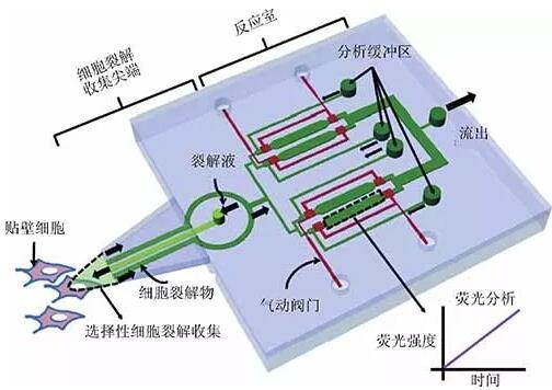 微流控探针的原理图