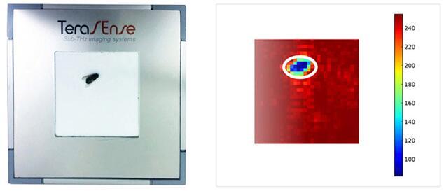 左图为苍蝇,右图为太赫兹(THz)成像系统检测出的苍蝇图像