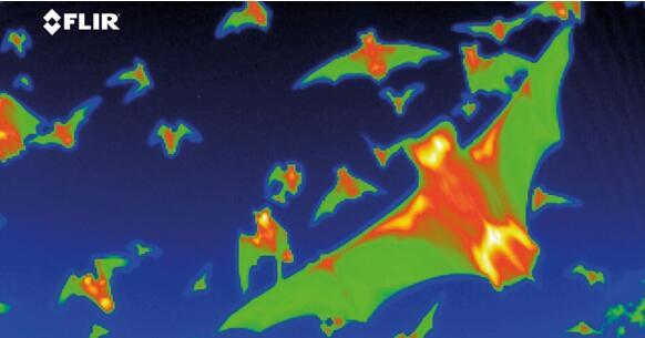 热成像 vs. 微光夜视,谁是全天候成像利器?