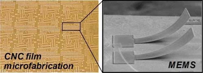 悬臂梁阵列、双端固支梁、残余应变计和机械强度计等可驱动的标准MEMS器件,可通过剪切对齐的纳米微晶纤维素(CNC)薄膜进行低温制造