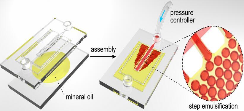 组合式阶梯乳化数字PCR微流控芯片