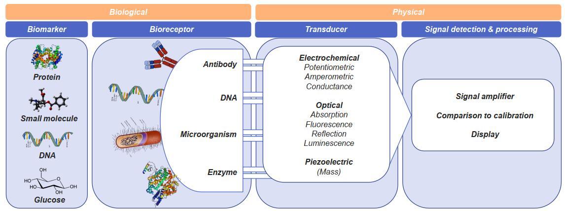 生物传感器:利用生物材料将生物反应转换为可读信号