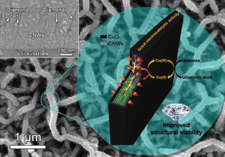 三维网状金刚石/碳纳米墙负载CuO纳米颗粒电化学传感电极结构与生物传感检测原理图
