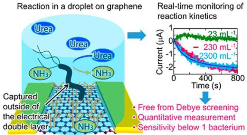 内置石墨烯传感器的微流控芯片,可检测微小样本中的细菌