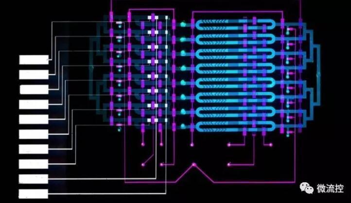 麻省理工学院研发新型生物传感器,更快诊断败血症