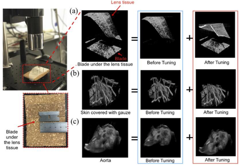 实验样本的高拓朴3D高信噪比OCT成像