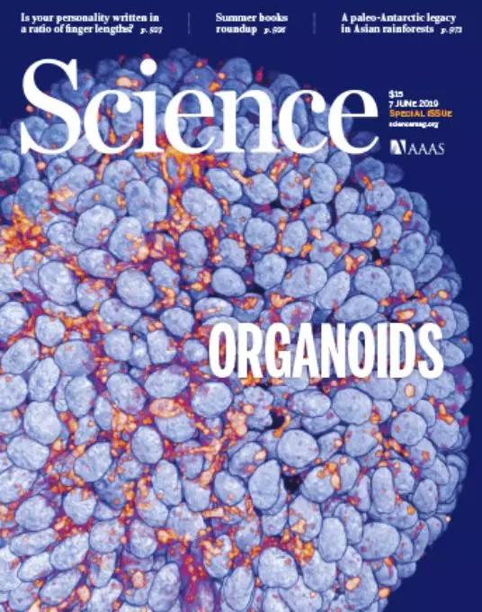 《Science》杂志刊登了由美国宾夕法尼亚大学的Sunghee EstellePark、Andrei Georgescu和Dongeun Huh共同撰写的综述Organoids-on-a-chip(器官芯片)