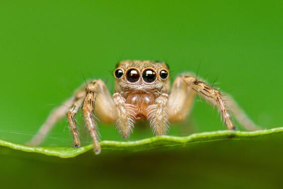 灵感源自蜘蛛的超透镜深度传感,为紧凑型设备提供3D视觉能力