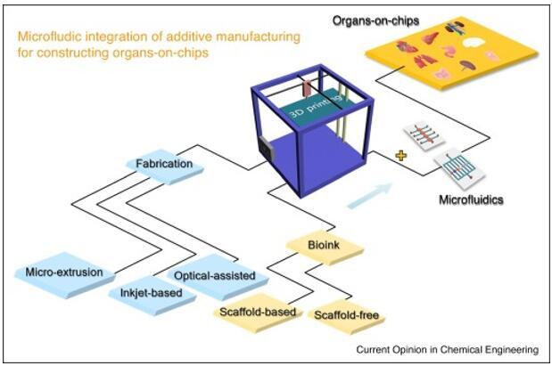 将增材制造与微流控技术集成到器官芯片上的概念