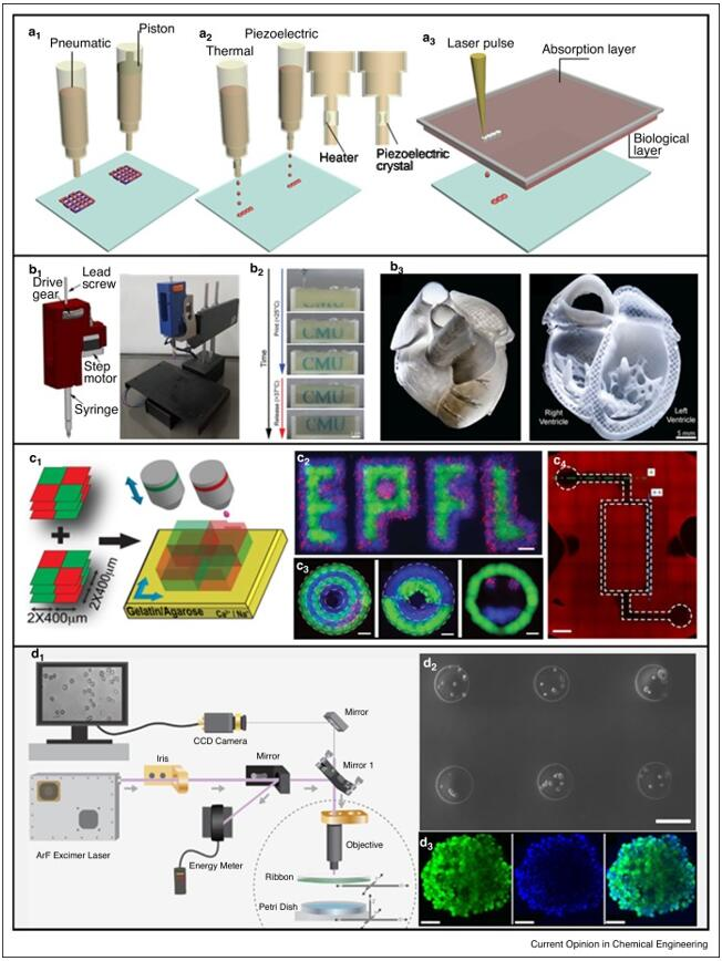不同工作原理的3D细胞打印方法示意图