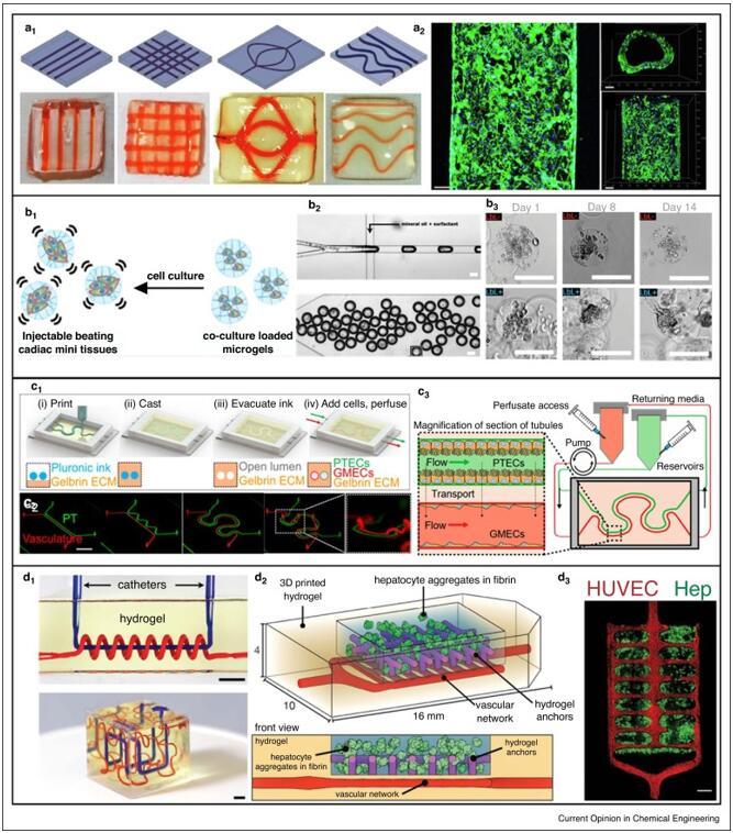 与微流控器官芯片集成的3D生物打印