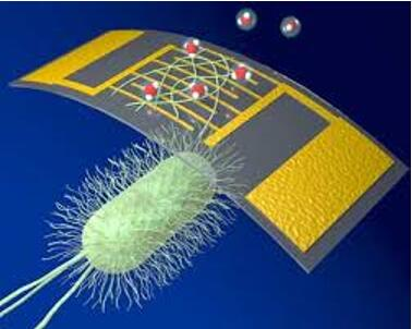 研究人员利用蛋白质纳米线开发出高灵敏生物电子氨气传感器