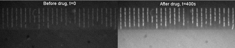 细菌吸收抗生素的前后对比图