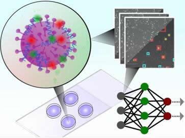 该测试使用卷积神经网络对不同病毒的单个完整颗粒的显微镜图像进行分类