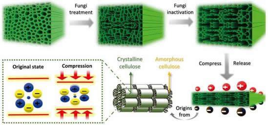 真菌处理后木材结构的演变,第二行展示了木材的压电效应原理