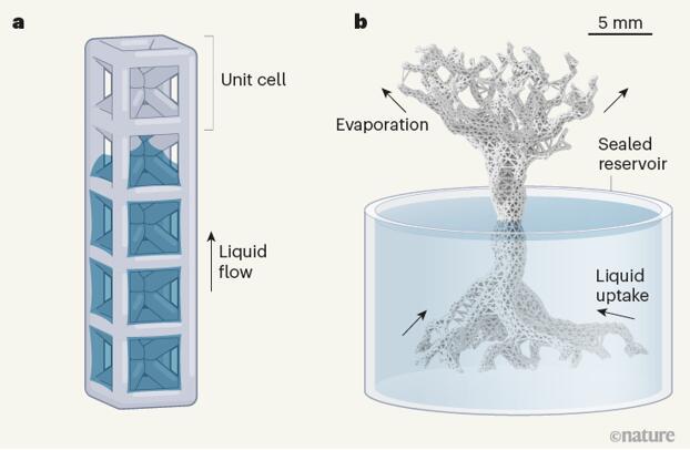 从蒸腾作用获取灵感的单位晶格概念,结合毛细作用驱动微流控系统中的液体流动