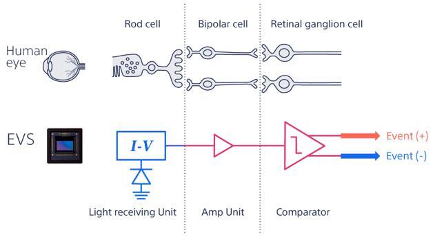 基于事件的视觉传感器(EVS)模拟了人眼感知光线的方式